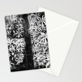 Air Plant Waterfall Stationery Cards