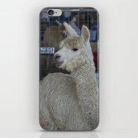 alpaca iPhone & iPod Skins featuring White Alpaca by Deborah Janke