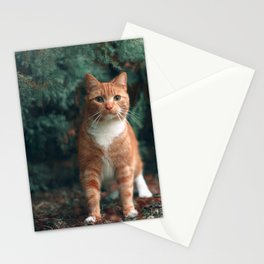 Kitten in the forest Stationery Cards