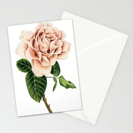 Pink Cappuccino Rose Watercolor Painting Stationery Cards