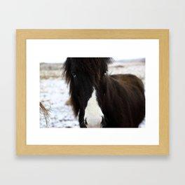 Blue Eye Icelandic Horse Framed Art Print