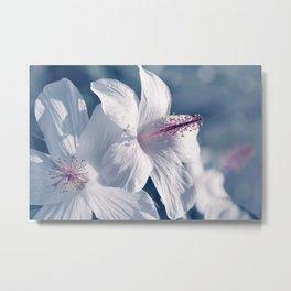 sweet sleep pua aloalo kokio keokeo hawaii white hibiscus flowers Metal Print