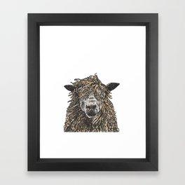 Cotswold Sheep Framed Art Print