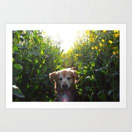 Rex The Dog Art Print