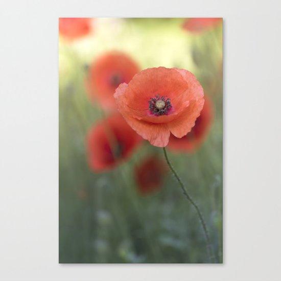 Beautiful poppy in a meadow Canvas Print