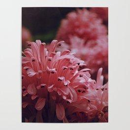 Pink Bellingrath Floral Poster