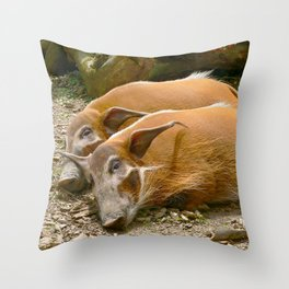Red River Hogs taking a nap Throw Pillow