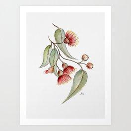 Flowering Australian Gum Art Print