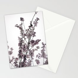 Dusted Pink Blossoms Stationery Cards
