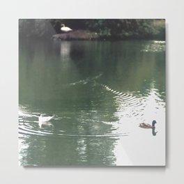Birds swimming, Water Ripples Metal Print