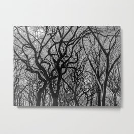 Central Park Trees in Autumn Metal Print