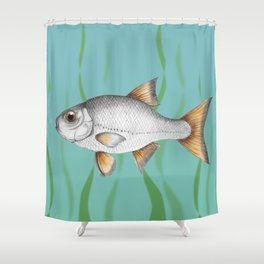 Common roach fish Shower Curtain