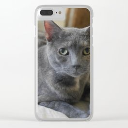 Sweet Russian Blue Grey Kitty Cat Clear iPhone Case