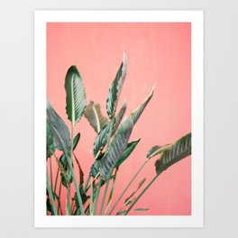 Palm on pink | Botanical photography print | Spain travel photo art Art Print