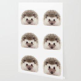 Baby Hedgehog Wallpaper