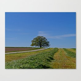 Relaxing in a field Canvas Print