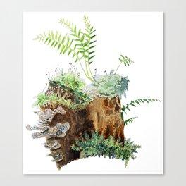 Mossy Stump Canvas Print