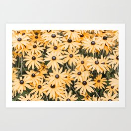 Field of Black Eyed Susans Art Print