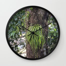 Epiphyte growth on tree in rainforest Wall Clock