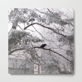 Winter crow. Metal Print