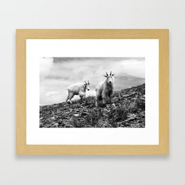 MOUNTAIN GOATS // 1 Framed Art Print