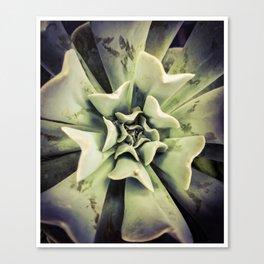 Succulent 4 Canvas Print