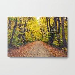 Fall Trail Metal Print