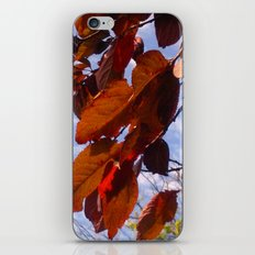 Autumn is in the Air iPhone & iPod Skin