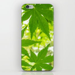 Green leaves of Japanese maple iPhone Skin