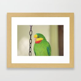 Chained Parrot Framed Art Print