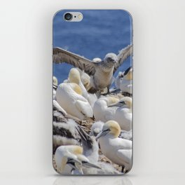 Learning to Fly iPhone Skin