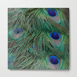 Tail feathers Metal Print