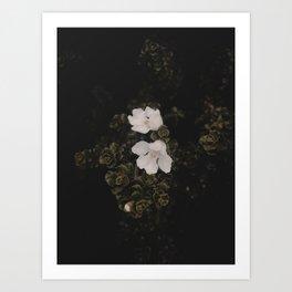 Wildflower Series - Invercargill Art Print