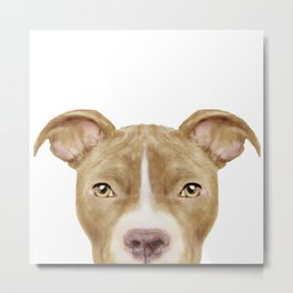 Pit Bull light Brown 2,Dog illustration original painting print Metal Print