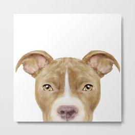 Pit Bull light Brown 2,Dog illustration original painting print Metal Print