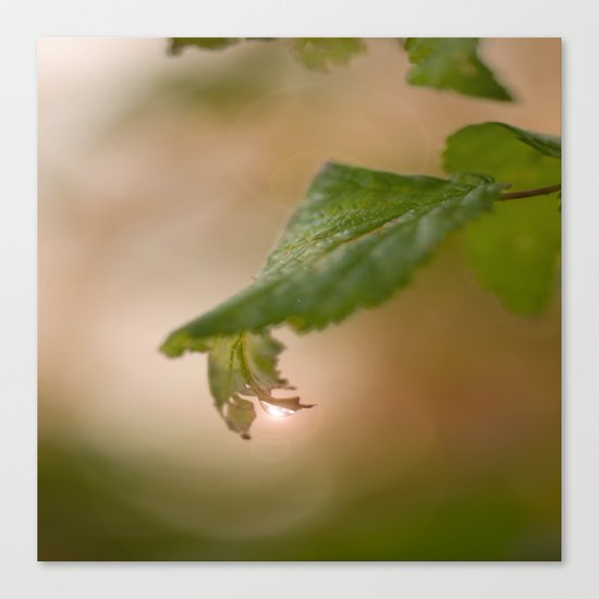 Shiny Drop n Forest Canvas Print