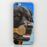 rottweiler iPhone & iPod Skins featuring Rottweiler by paintintheneck