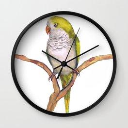 Quaker parrot in watercolor Wall Clock