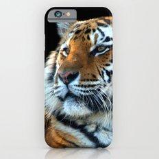 Sumatran Tiger - Panthera Tigris Sumatrae Slim Case iPhone 6