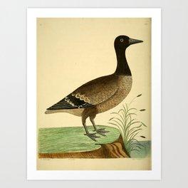 Brant Goose5 Art Print