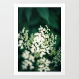 Elderberry Dreaming Art Print
