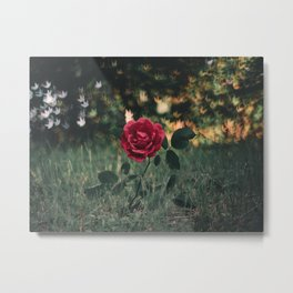 Single Red Rose In A Grassy Field With Bokeh Maple Leaves In The Background Metal Print