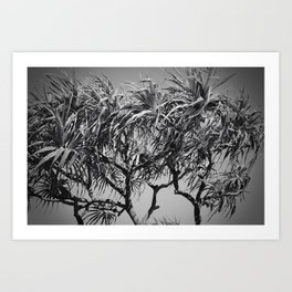 Mahama Lauhala Hala Trees Pandanus Art Print