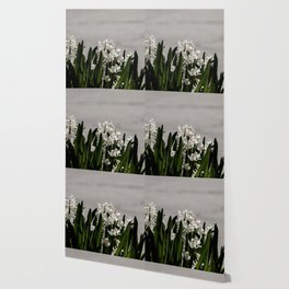 Hyacinth background Wallpaper