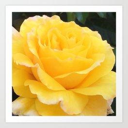 My Yellow Rose Art Print