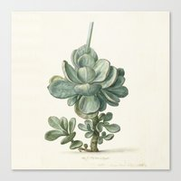 succulent Canvas Prints featuring Succulent by anipani