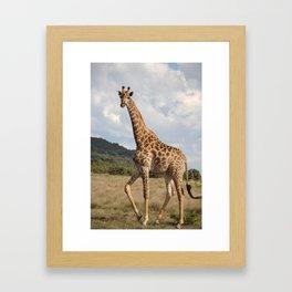 Giraffe_front Framed Art Print