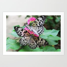 Butterfly Gardens Art Print