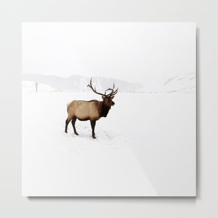 Standing Elk in Jackson Hole, Wyoming Metal Print
