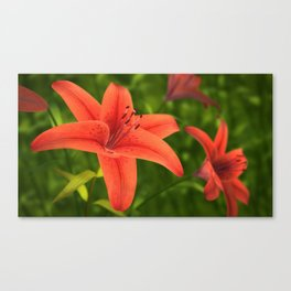 Lilium Flower Canvas Print
